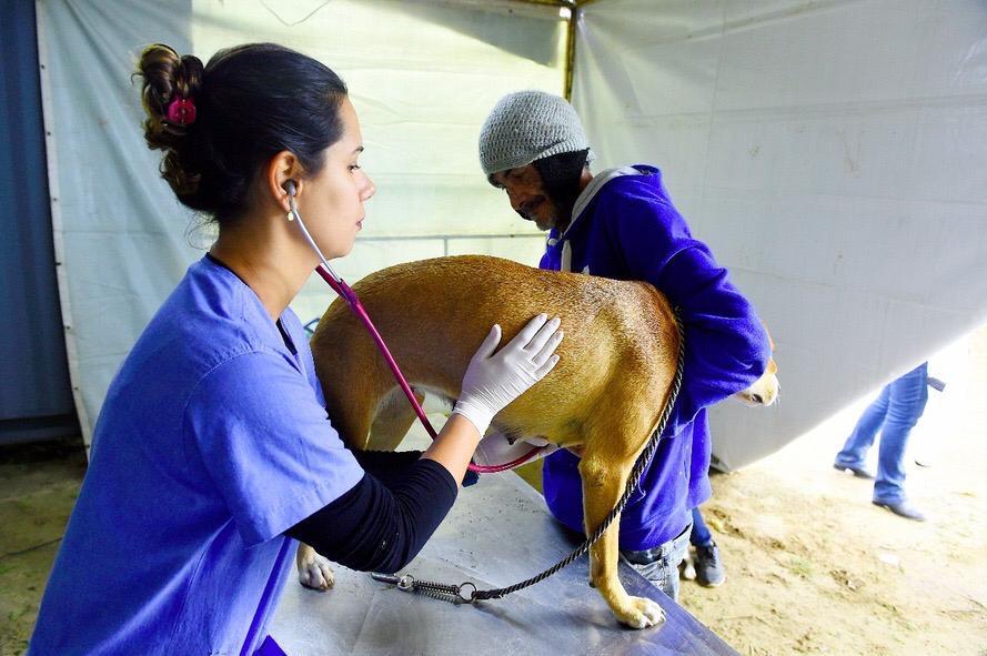 Recurso viabilizado por Michele Caputo vai permitir a castração de mais de 500 animais em Peabiru